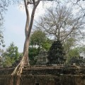ANGKOR-WAT.RUINS-WITH-TREE.