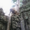 Angkor-Wat.-Tree-and-Temple