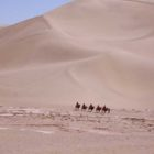 Silk Road Desert with camels